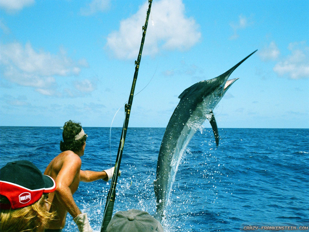 marlin-fishing-summer-in-australia-wallpapers-1024x768